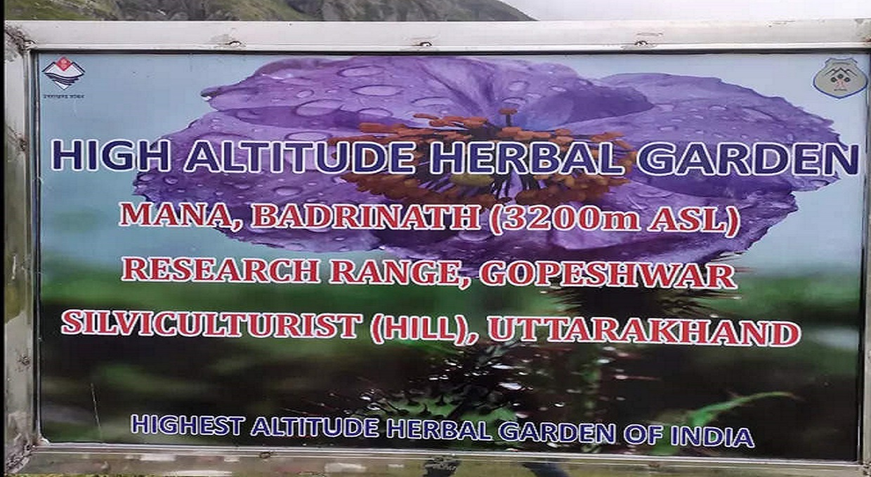 Herbal garden Mana